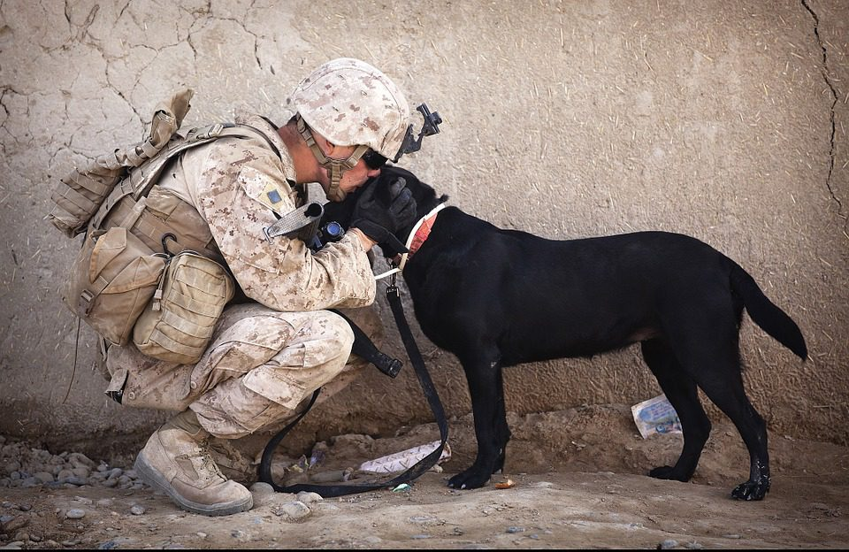Active Service Dogs