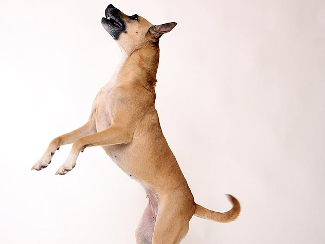 https://dog-harmony.org/wp-content/uploads/2016/08/147662974-control-dog-jumping-632x475.jpg
