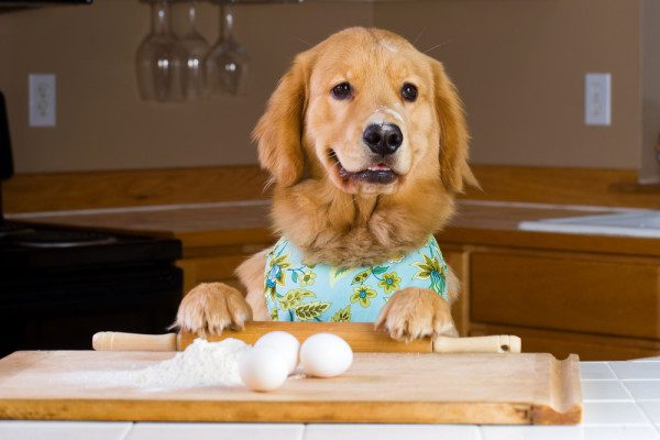 http://dog-harmony.org/wp-content/uploads/2016/11/Dog-Preparing-Dinner-e1381246128835.jpg