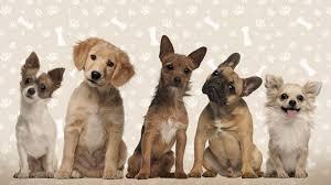 https://dog-harmony.org/wp-content/uploads/2017/04/images.jpg