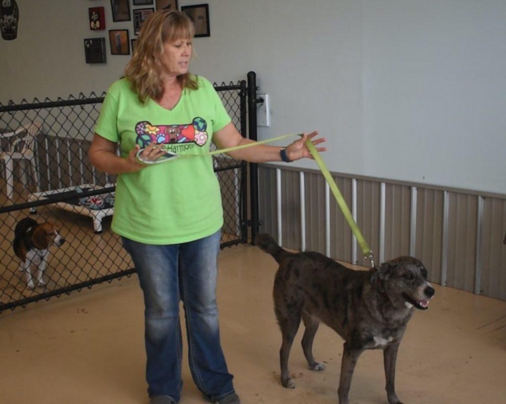 https://dog-harmony.org/wp-content/uploads/2018/01/Nancy2-1024x818.jpg