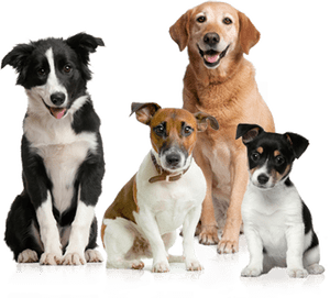 http://dog-harmony.org/wp-content/uploads/2018/09/Dog-Pack.png
